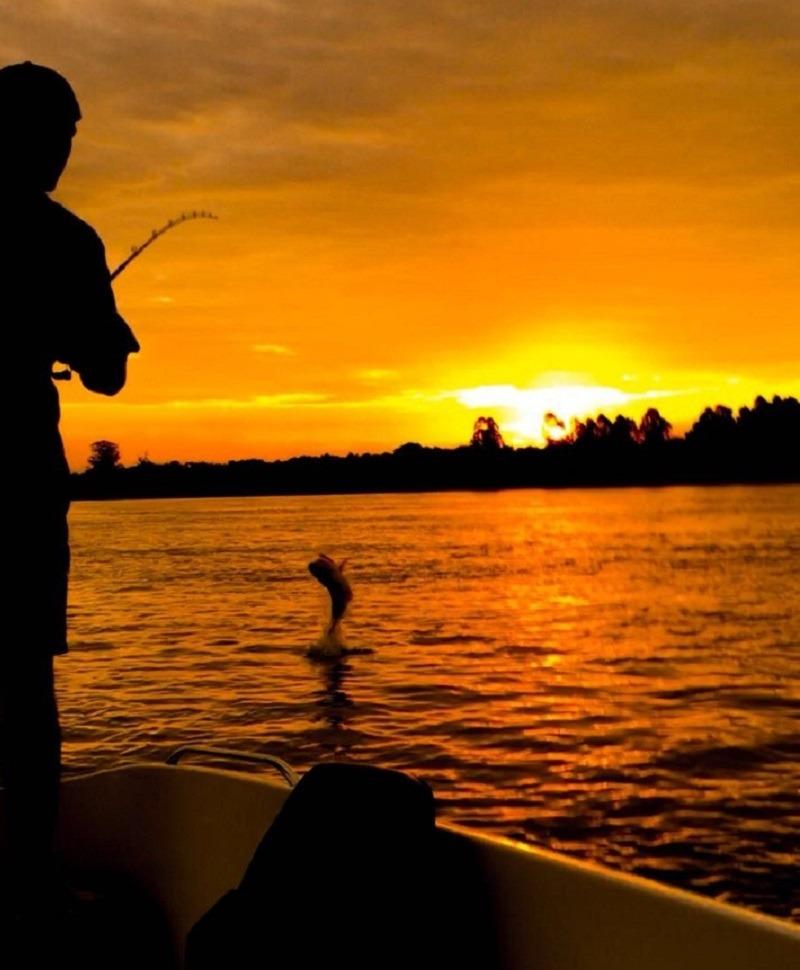 Un dorado salta sobre el río atrapado por un pescador que pesca al atardecer