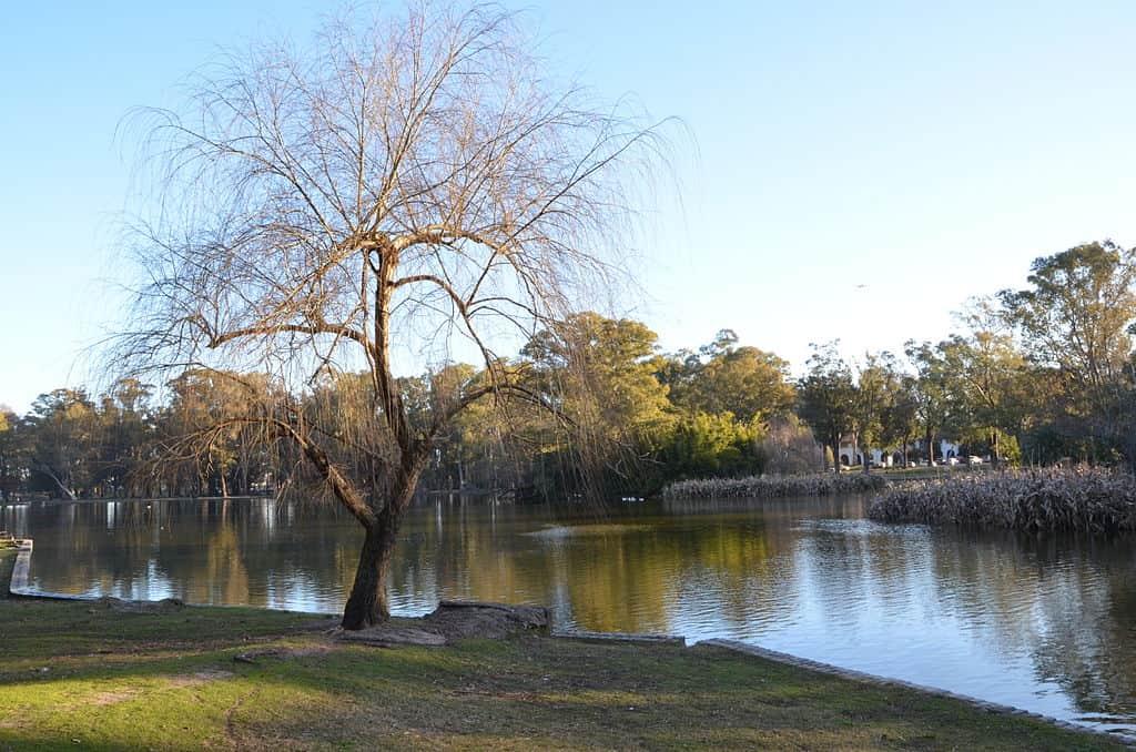 Imagen de un árbol sin folaje, al costado de un lago. Al fondo se observa un parque arbolado