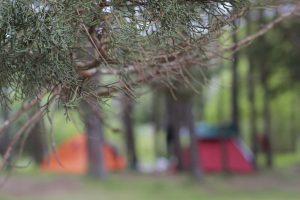 Imagen de dos carpas de colores rojo y naranja, debajo de los árboles