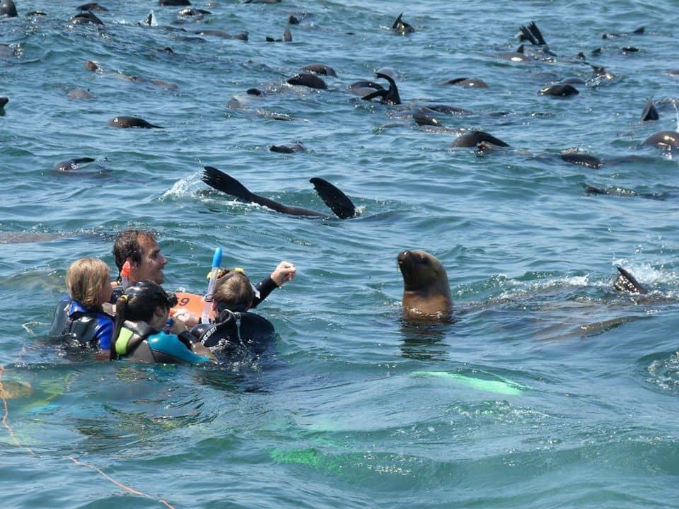 Un hombre y tres niños nadan rodeados de lobos marinos