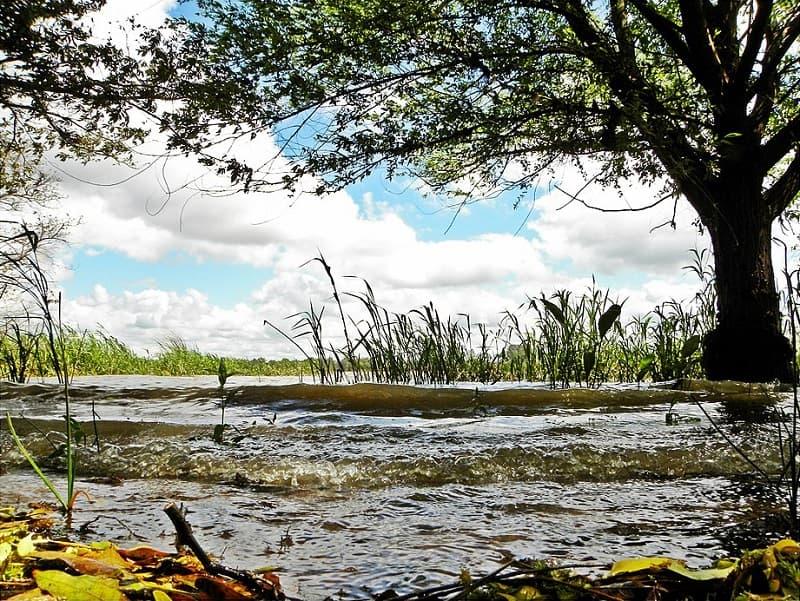 Imagen cercana de un árbol a orillas de un río, sobre el que hay vegetación acuática, en Esteros de Farrapos, uno de los parques nacionales de Uruguay